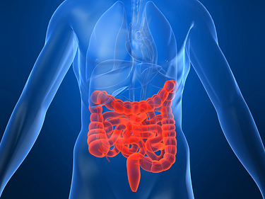 National Conference on Gastroenterology to Be Held in Varna in June